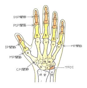 18. 手根骨の骨折 月状骨脱臼(げつじょうこつだっきゅう)